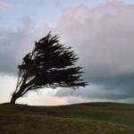 """""""Ветрот носи убаво време"""""""